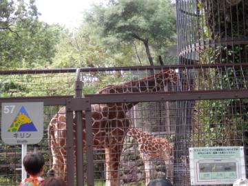 2014-11_zoo1_02