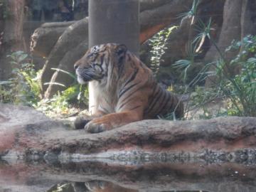 2014-11_zoo1_09