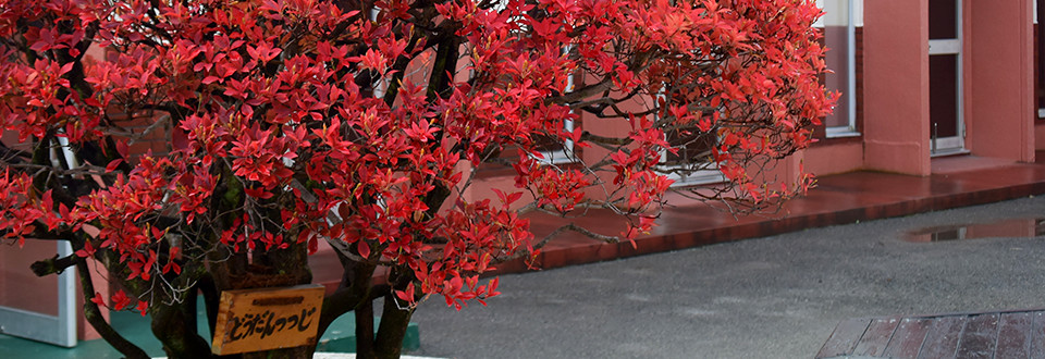 red_tree